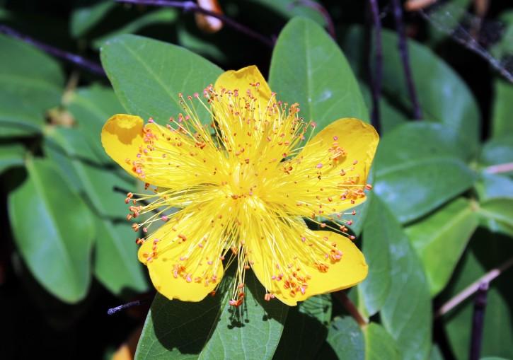 FlowerBackyard_6808