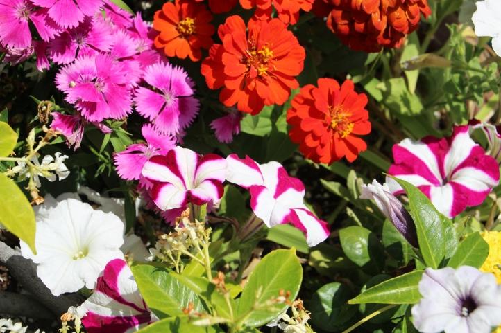 FlowerMix_0983